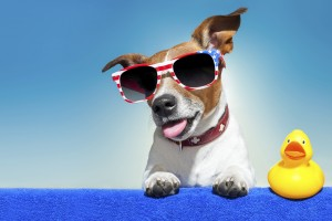 Summer Pet Care Tips