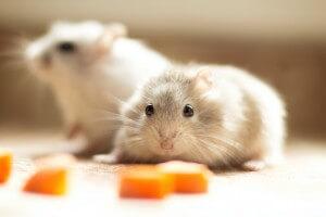 Veterinarian for Small Mammals