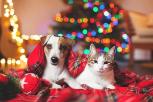 holiday hazards for your pet