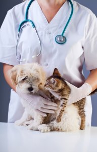 Warning Signs for Cancer in Your Pet