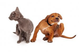 Guide to Managing Flea and Tick Season