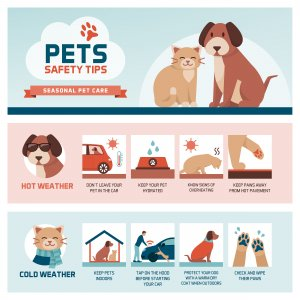 Seasonal pet safety tips