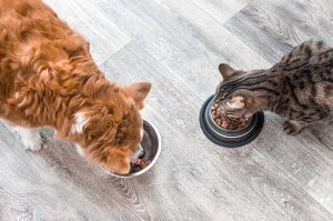 Pet DIet - Pet Food
