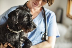 How Does Cryosurgery Help Your Dog?